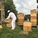 miód od naszych pszczół